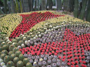 アモイ万石植物園のサボテン